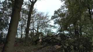 Zware Zuid-Wester Storm 28 oktober 2013 verandert Klinze park te Aldtsjerk in natuurbos.