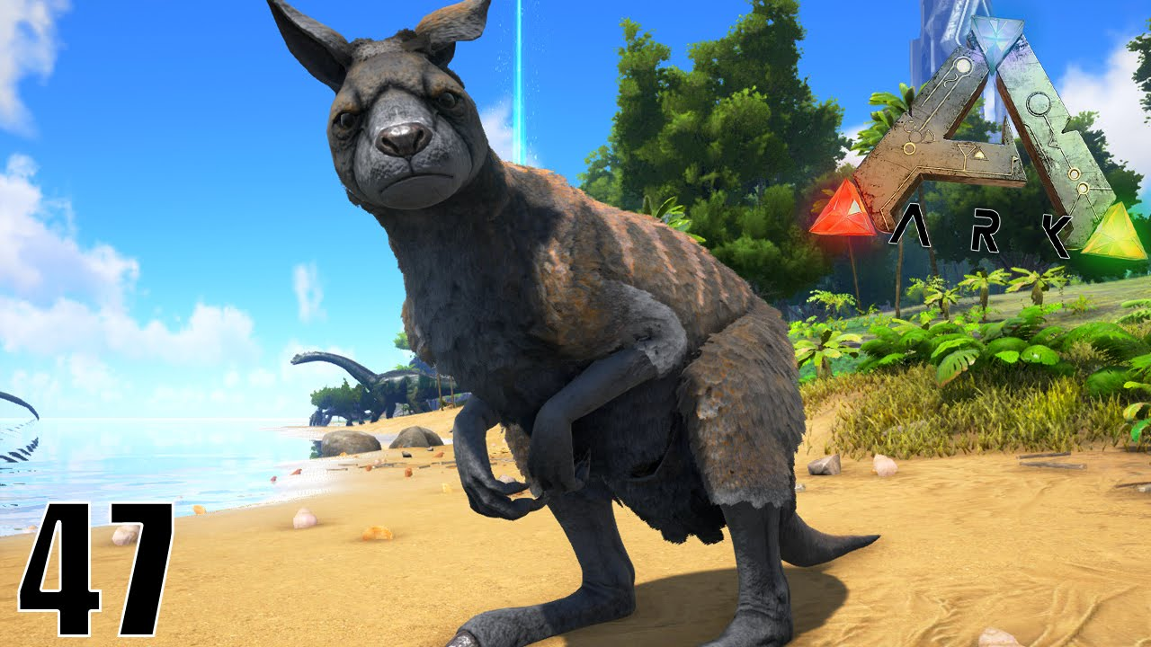 La capture d 39 un kangourou g ant ark survival evolved ep47 youtube - Image kangourou ...