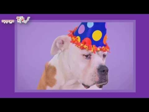 Dogs Birthday Song