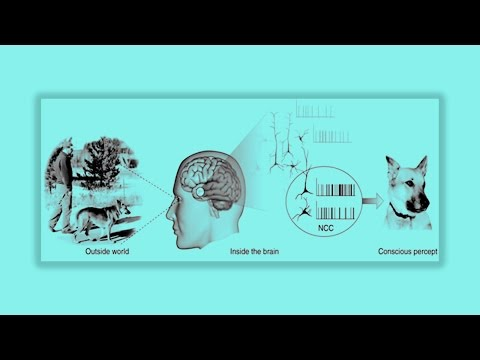 Lecture 11: Visual Attention and Consciousness