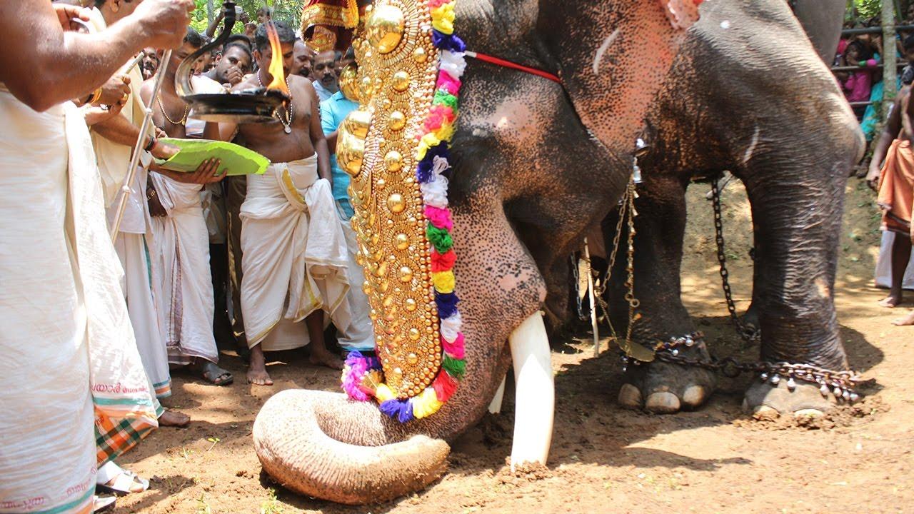 Kerala Elephant Chalukuthu 2017 Painoor Padam ...
