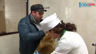 В Челябинске бесплатно привьют животных от бешенства