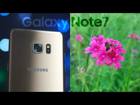 Samsung Galaxy Note 7 Camera Review - Splendid As Expected!
