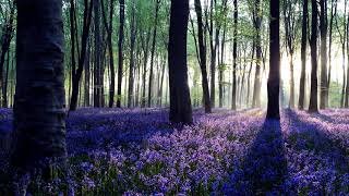 Healing Spa Music Lavender Forests Relaxing Ethereal Ambient Sleep