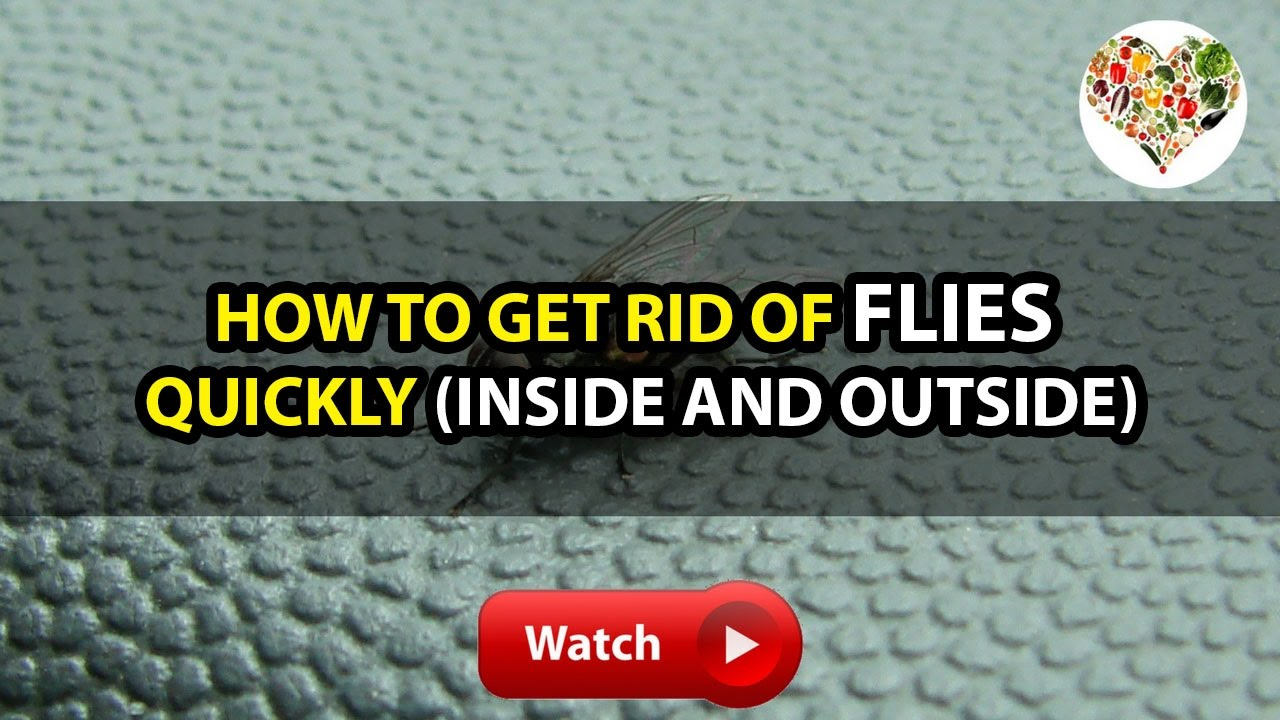 BH4U | How to Get Rid of Flies Quickly (Inside and Outside) - YouTube
