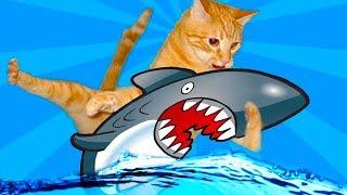 #3 КОТЕНОК РЫБОЛОВ симулятор кошачьей рыбалки видео про маленького котенка как   игра от фгтв