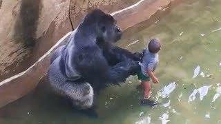 Настолько Неожиданных Случаев с Животными Вы Еще не Видели | Топ 10