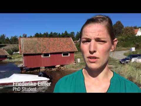 Professor Henrik Pavia and PhD student Friederike Eimer talk about their seaweed project.