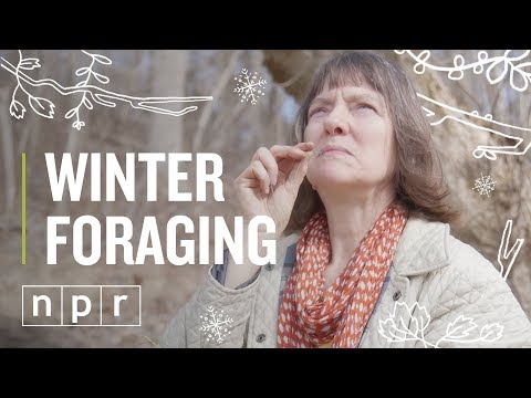 Winter Foraging | The Salt | NPR