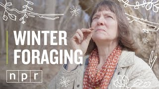 Winter Foraging   The Salt   NPR