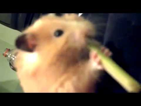Attemp to eat whole Celery stick!?