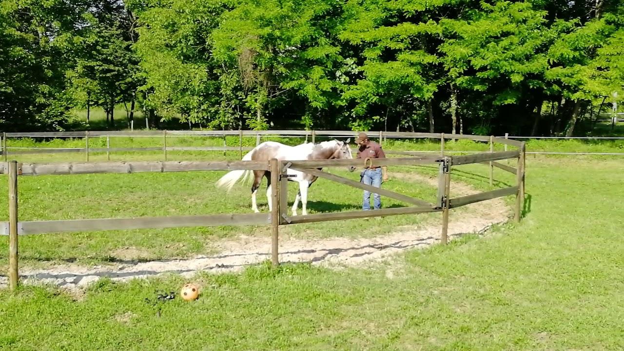 Tondino Per Cavalli.Lavoro Del Cavallo In Tondino Attirare Il Cavallo Verso Di Noi