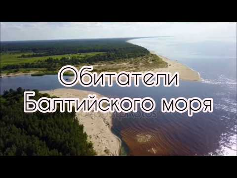 Обитатели Балтийского моря
