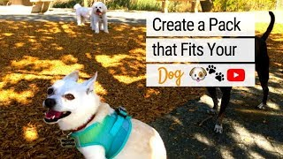 Create a Pack that Fits Your Dog