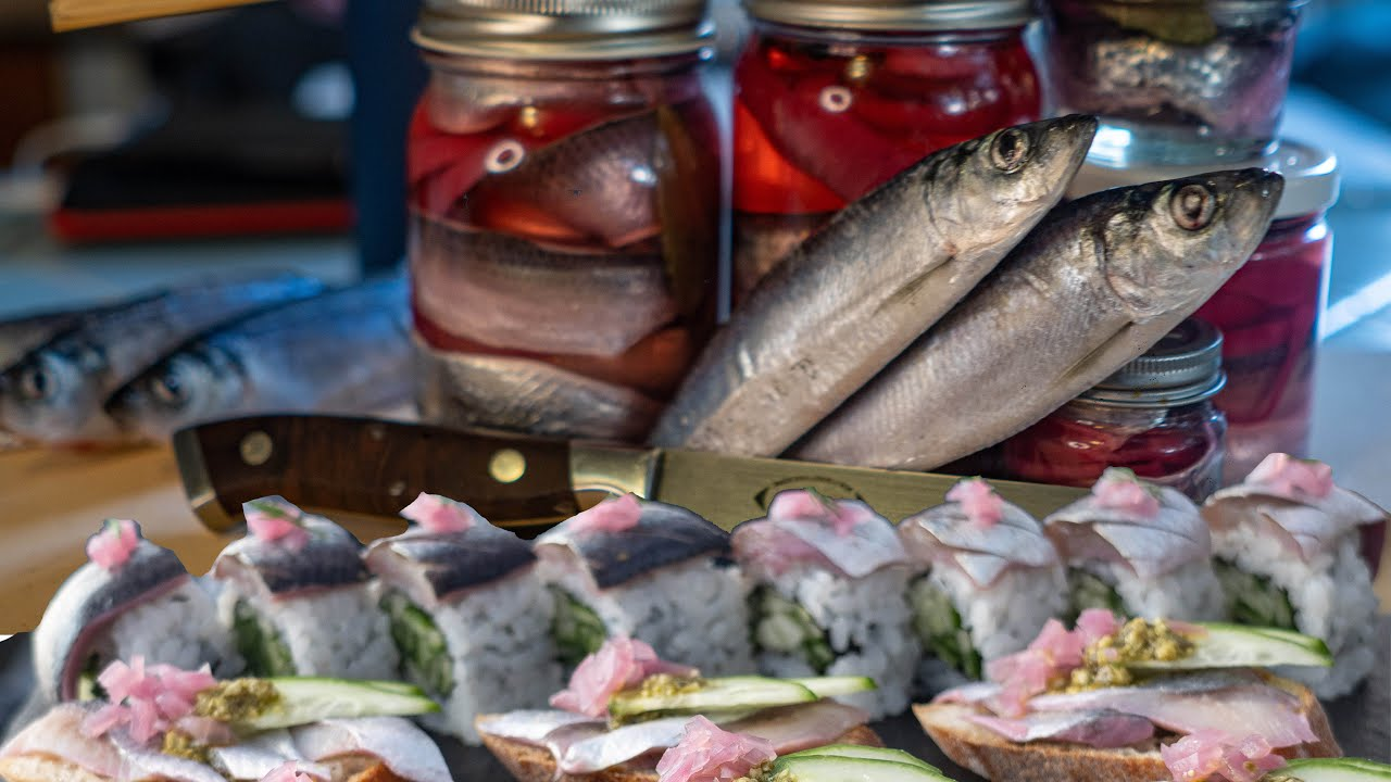 PICKLED HERRING SUSHI | Amazing Catch, Clean, Fillet, and Pickle Spawning Herring