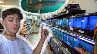 INCREDIBLE PET Store TOUR! *NEW FISH*