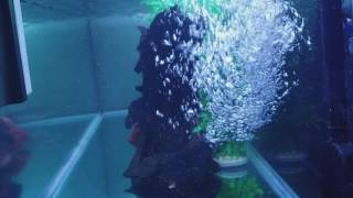 THE TRUE POWER OF THE FLUVAL FX6! INSANE WATER FLOW!