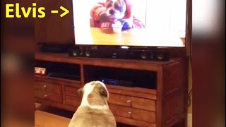 Can Dogs See Images On TV? We Say YES.