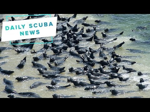 Daily Scuba News - Stop The Cape Cod Seals!