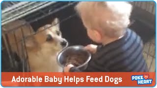 Baby Insists On Feeding Dogs, So Adorable!