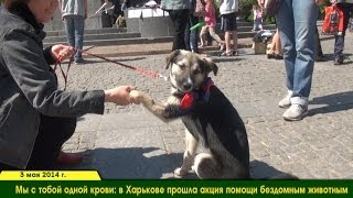 Бездомные животные Харькова: акция