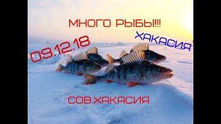 Рыбалка в Сов.Хакасии Много рыбы РекМат
