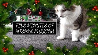 My Christmas Present to You: Five Minutes of Supreme Leader Mishka Purring