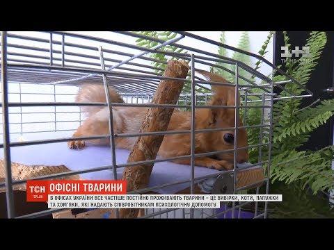 Гризуть канцтовари та спілкуються без слів: в офісах України все частіше постійно проживають тварини