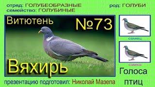 Вяхирь. Витютень. Голубь. Голоса птиц(, 2015-06-28T14:39:08.000Z)