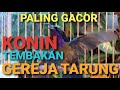 Konin Paling Gacor Tembakan Gereja Tarung  Mp3 - Mp4 Download