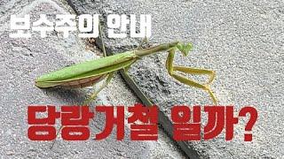 보수주의 안내 : 모듬뉘우스.  천막당사 tv 20.1…