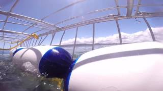 Great White Shark Cage diving close call