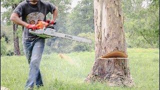 Cómo Cortar Un Árbol  Con Motosierra