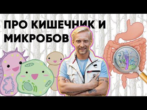 Дмитрий Алексеев — Работа кишечника и микробов в нём