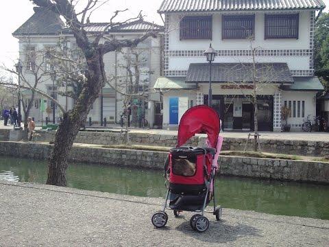 Kurashiki Bikan historical quarter in Okayama Pref.   Japan travel guide for cats