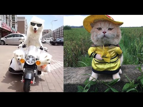 Try Not To Laugh Challenge - Funny Pet Videos Cat & Dog Vines Compilation Part 2 - HerePup