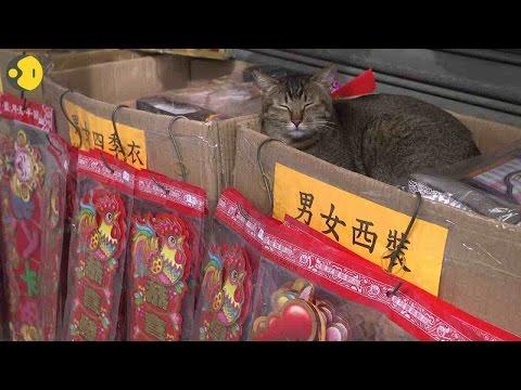 Hong Kong cats watch over business
