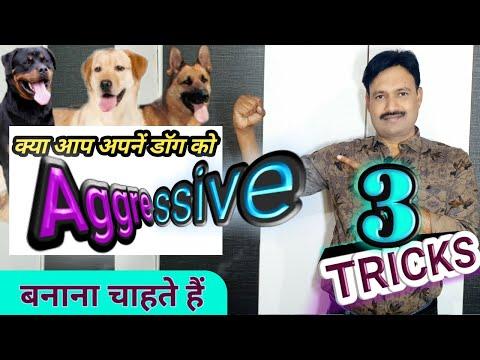 डॉग को ट्रेनिंग कैसे देते हैं Dog Ko Aggressive Kaise Banaye कुत्ते को सिखाने के तरीके 3 तरीके