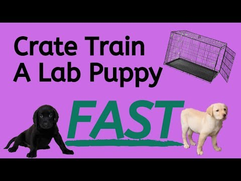 Crate Training A Lab Puppy - 5 Easy Steps