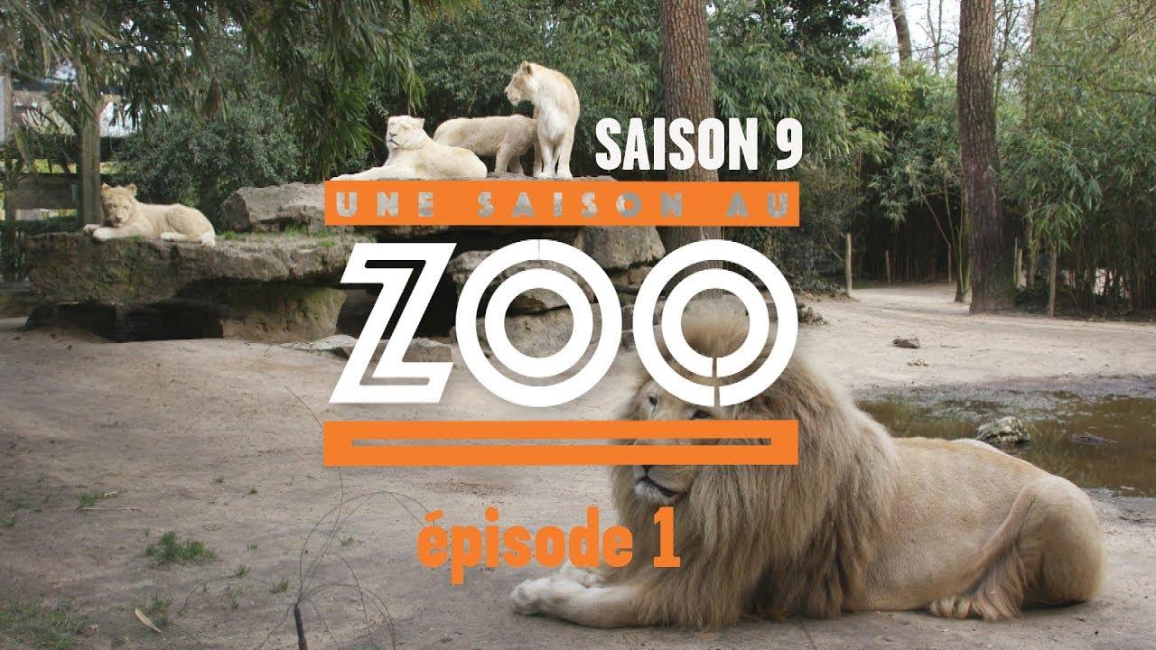 Download Une Saison au Zoo S9 - Ep01