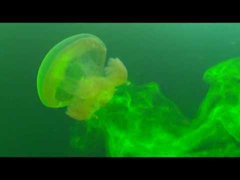 Jellyfish Mixing
