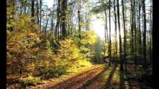 Johann Strauss II. - Geschichten aus dem Wiener Wald (Walzer, op.325)
