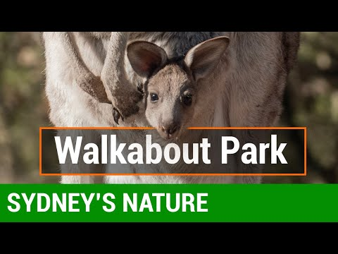 Walkabout Park | Sydney Guided Tours
