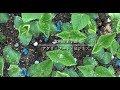 【2分間で食農大】大学の特色を紹介! の動画、YouTube動画。