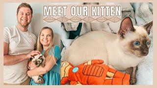 MEET OUR KITTEN | First Day, Kitten Tips, Tonkinese Cat