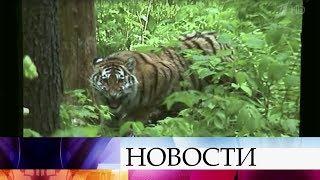 Премьера нового документального фильма Сергея Ястржембского «Тигры илюди» состоялась вМоскве.