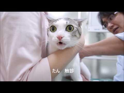 猫サンニンのワクチンとレボリューション☆