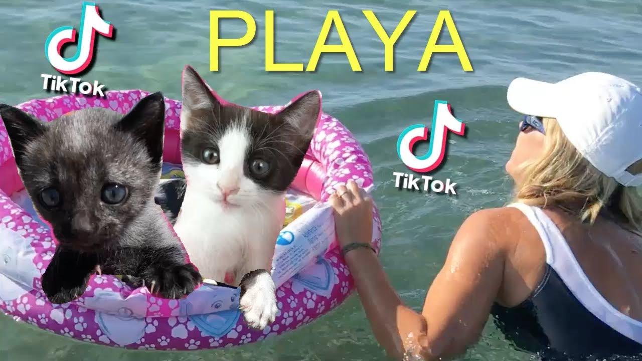 Los mejores Tik Tok en la playa de mis gatos chistosos Luna y Estrella 2 / Funny cats