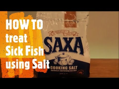 WHY TREAT SICK FISH With Salt | IT'S EASY | IT WORKS