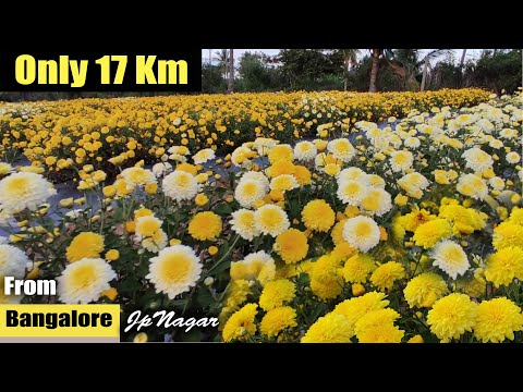Beautiful Flower Gardens just 17 kms from Bangalore | Nearest Flower Garden from Bangalore